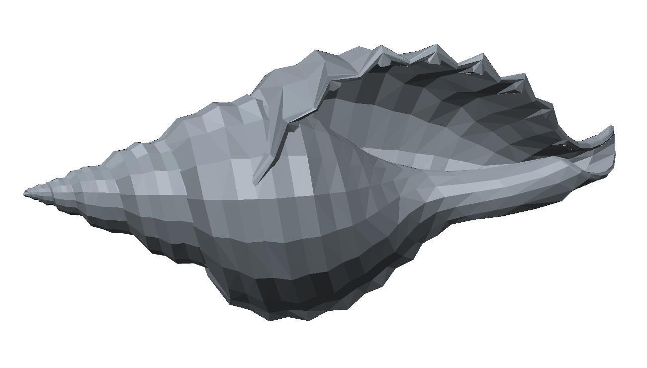 Seashell.jpg