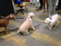 buntonfamilydaymoredogs8.jpg